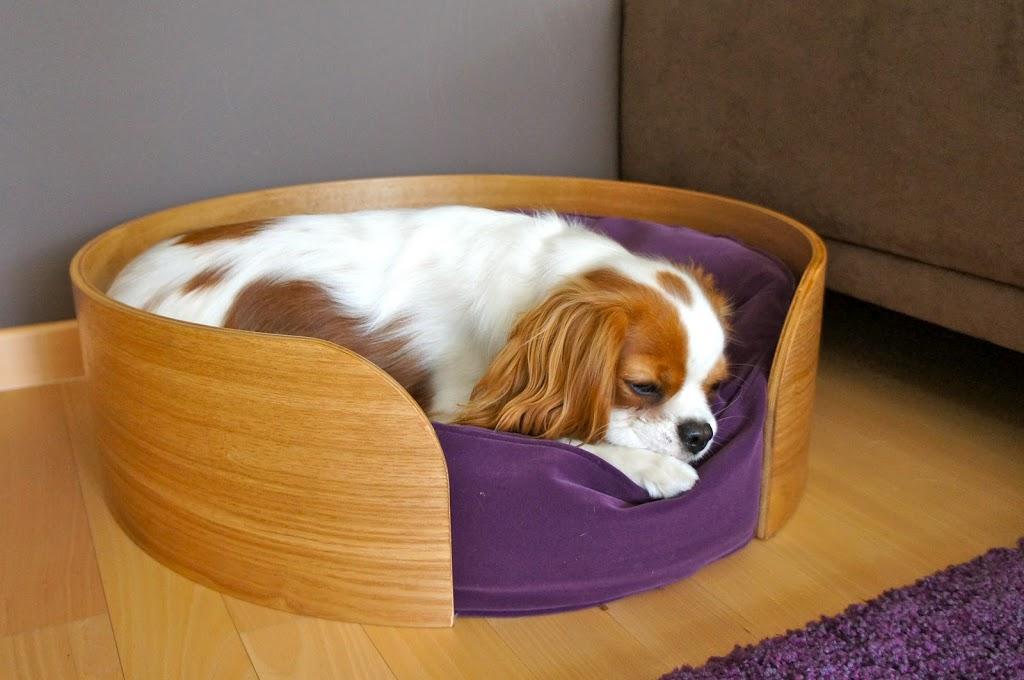 o placer le panier de son chien la maison comme. Black Bedroom Furniture Sets. Home Design Ideas